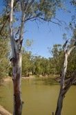 The Murrumbidgee River at Balranald