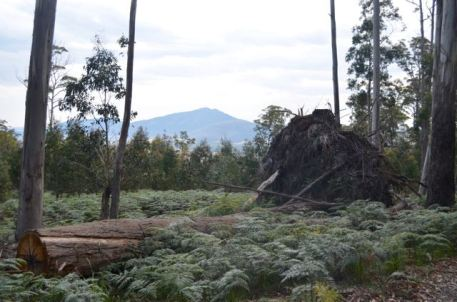 View of Langi Ghiran on the way to Ben Nevis