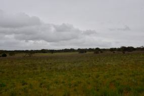 Cleared farming land to the east of the park