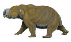 diprotodon11122