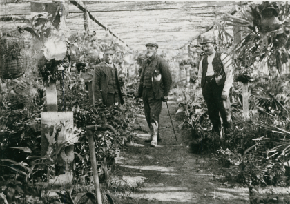 Inside a greenhouse at the nursery, c. 1912