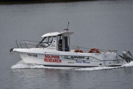 Dolphin research vessel