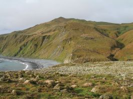 MacquarieIsland11