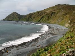 MacquarieIsland7
