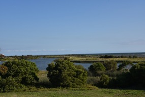 A view of the Jawbone Flora & Fauna Reserve from our back door.