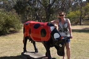 Cow art at Murchison