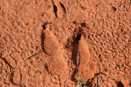 I think a Kangaroo track