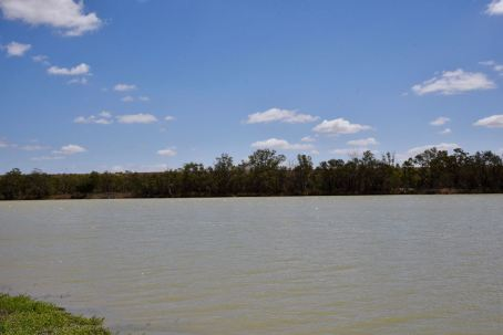 The Murray River at Swan Reach